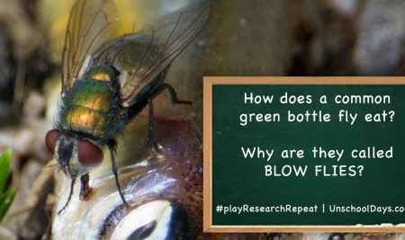 Why Is It Called a Blow Fly and how does it eat?