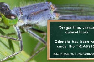 damselfly from the triassic